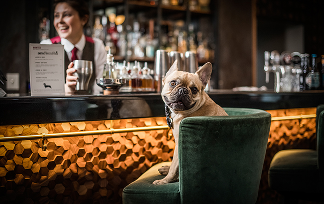 London bar debuts a cocktail menu for dogs in honour of National Pet Month photo