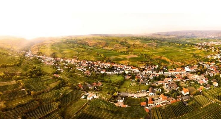 Discover Steininger Winery From Austria photo
