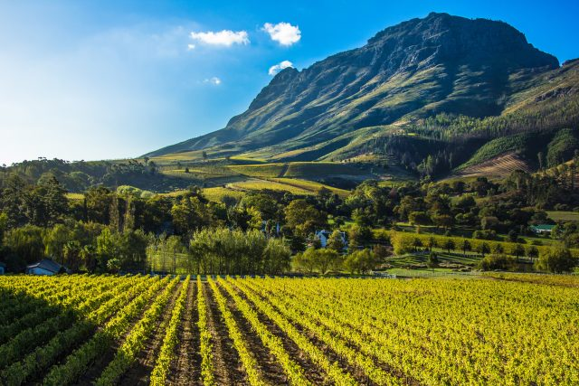 Advini acquires a majority share of Stellenbosch Vineyards photo