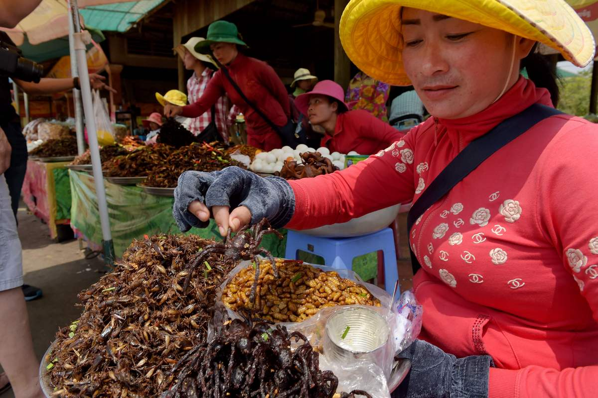 In Cambodia, Fears Tarantula May Go Off The Menu, photo