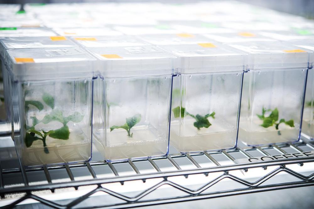 Using Cannabis Technology To Grow Coffee Plants photo