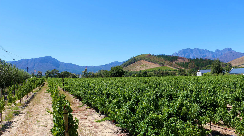Stay A While At Fransvliet Franschhoek photo