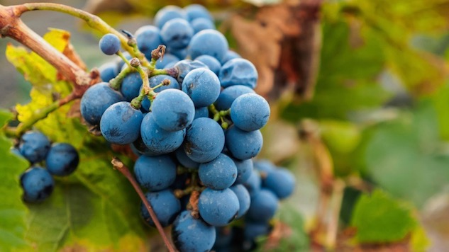 52 Wines In 52 Weeks: Malbec, A French Native Who Prefers Life In Argentina photo