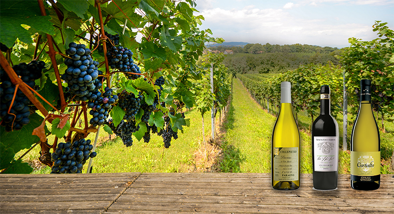 From Zero To Hero: Pecorino Wines Come Back From The Brink photo