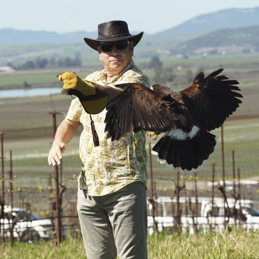 Napa: Bouchaine Vineyards? New Falconry Wine Experience Is A Hoot photo