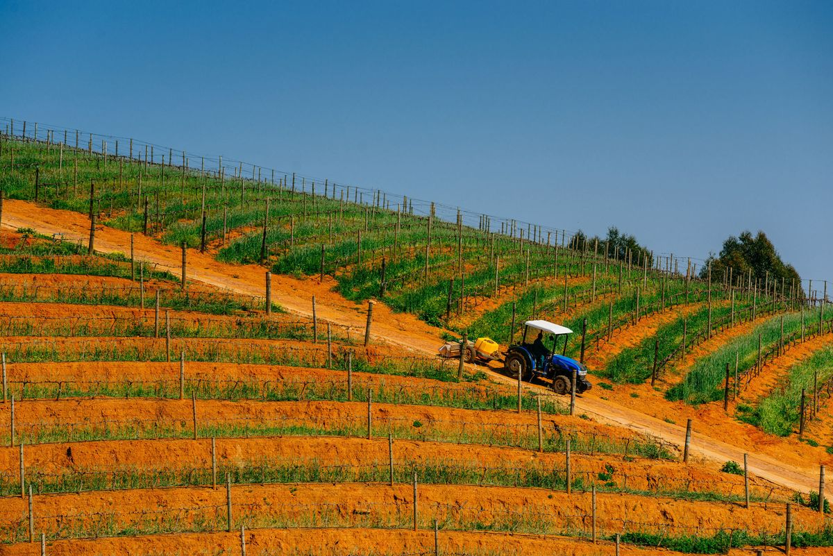 Cape Drought Makes South African Wine Pricier But Tastier photo