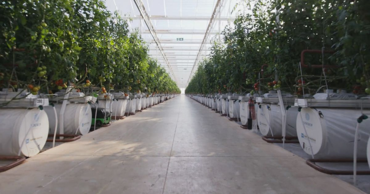 This Desert Farm Is Harvesting Food Using Nothing But Sunlight And Seawater photo