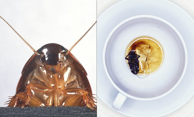Cockroach Milk Next Non-dairy Fad With Three Times The Energy photo