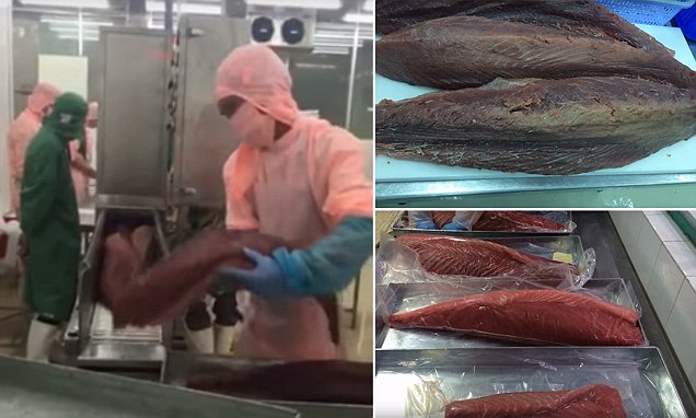 How factories illegally pump your seafood full of carbon monoxide to make fish up to a year old appear fresh photo