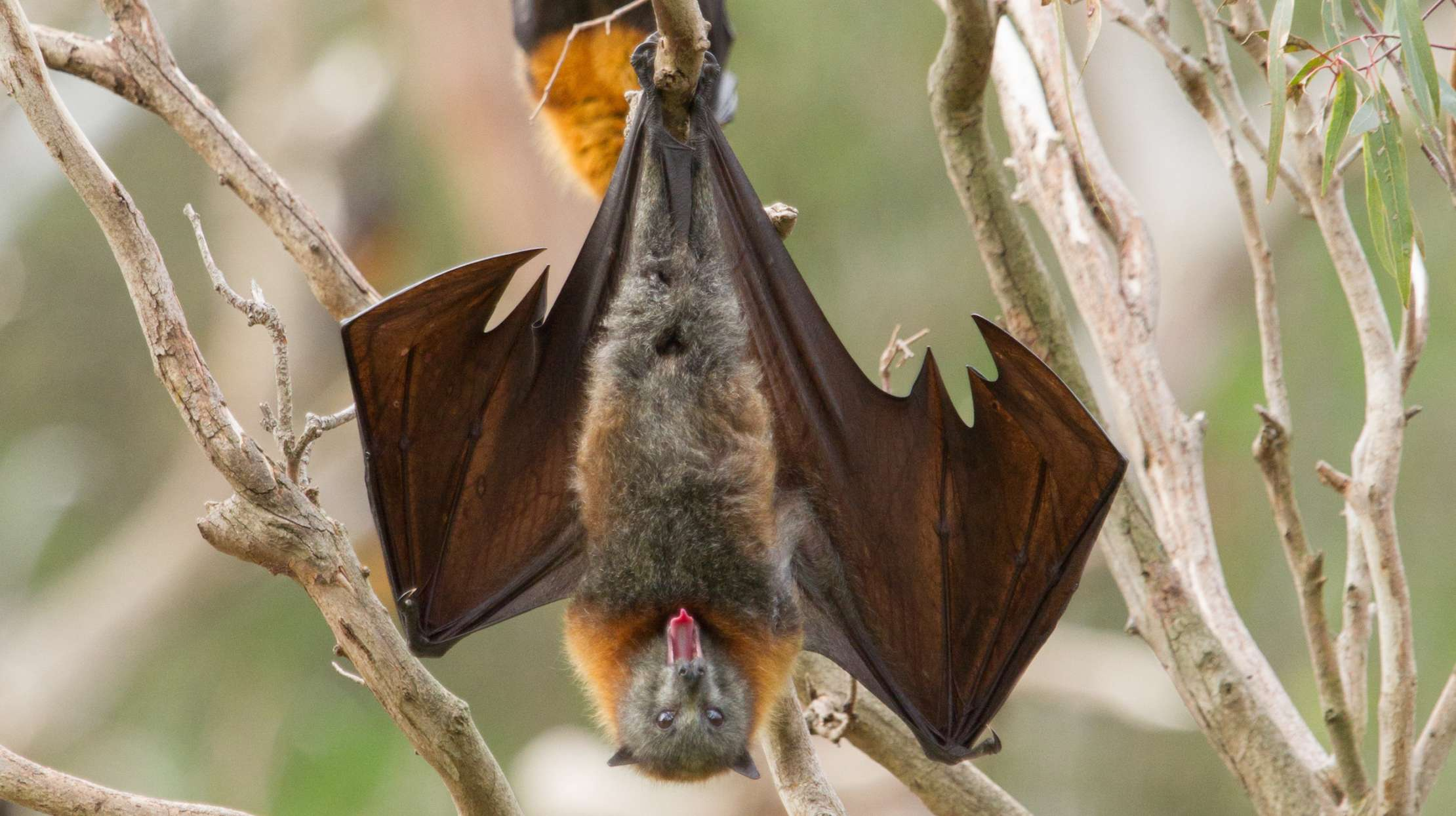 The Surprising Role Bats Play In Making Your Margarita photo