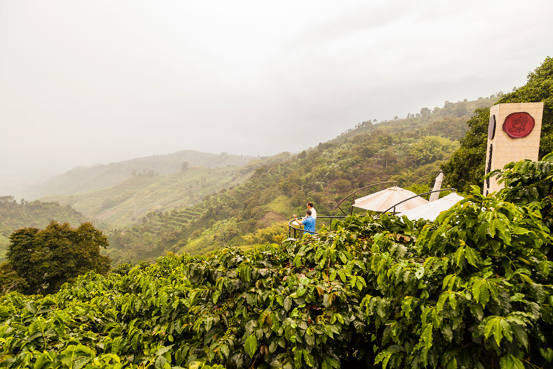Atop A Mountain, Colombia's Café San Alberto Takes Cues From Vineyards photo