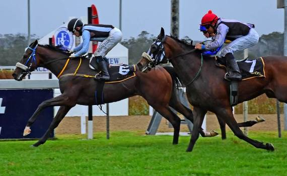 Strydom's Feature 1-2 At Fairview photo