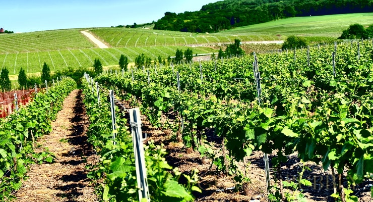 A Visit To The Grand Noir Region Of Champagne photo