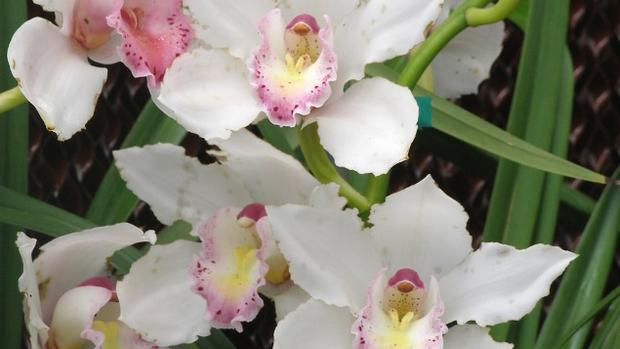 Visit The House And Garden's Orchids & Roses Fair photo
