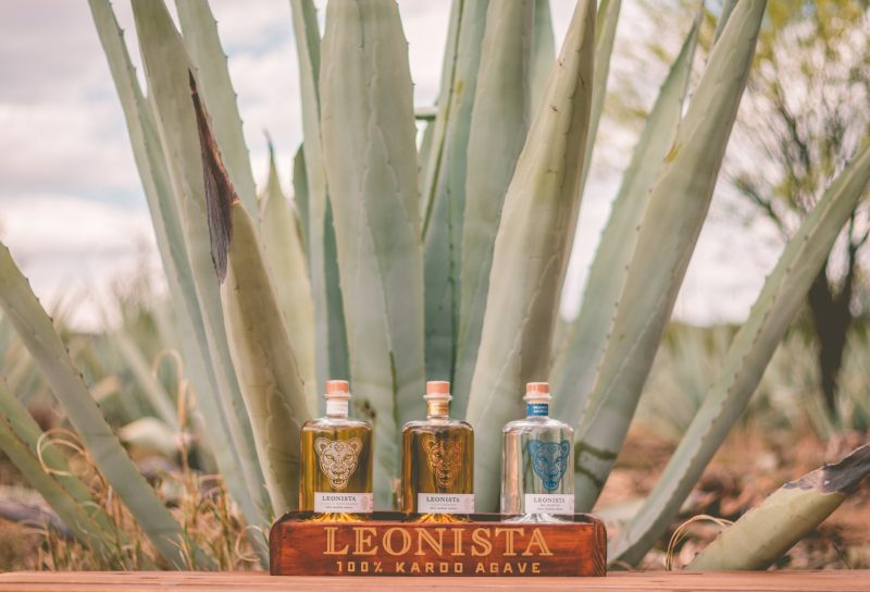 Leonista ReWild TV Alistair Daynes 7266 e1526383782565 Unleash Your Inner Lion With Leonista, South Africas 100% Karoo Agave Spirits