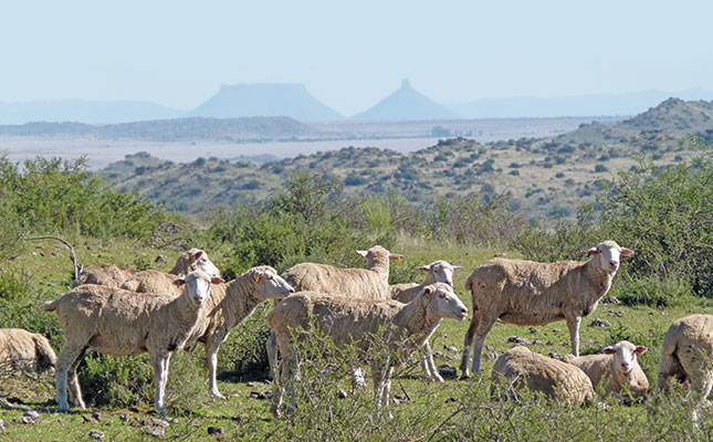 Alert Issued For Rift Valley Fever photo