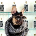 This Female-Founded Tequila Brand Is Helping Dogs with Every Bottle photo