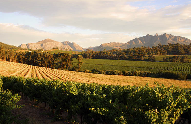 Linton Park Wines Really Focus On Sustainability And Conservation photo
