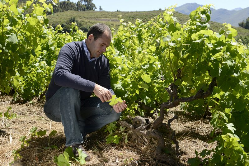 DGB appoints Stephan Joubert as new group winemaker photo