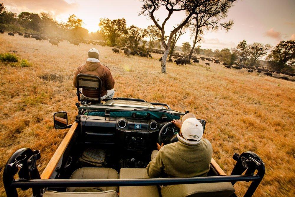 Conheça O Hotel De Luxo Localizado Em Plena Selva Da África Do Sul photo