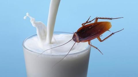 Cockroach milk could be the next non-dairy fad with three times the energy photo