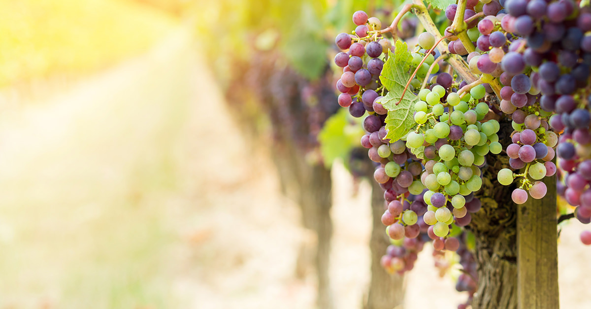 These Are The 7 Most Popular Organic Wines In America photo