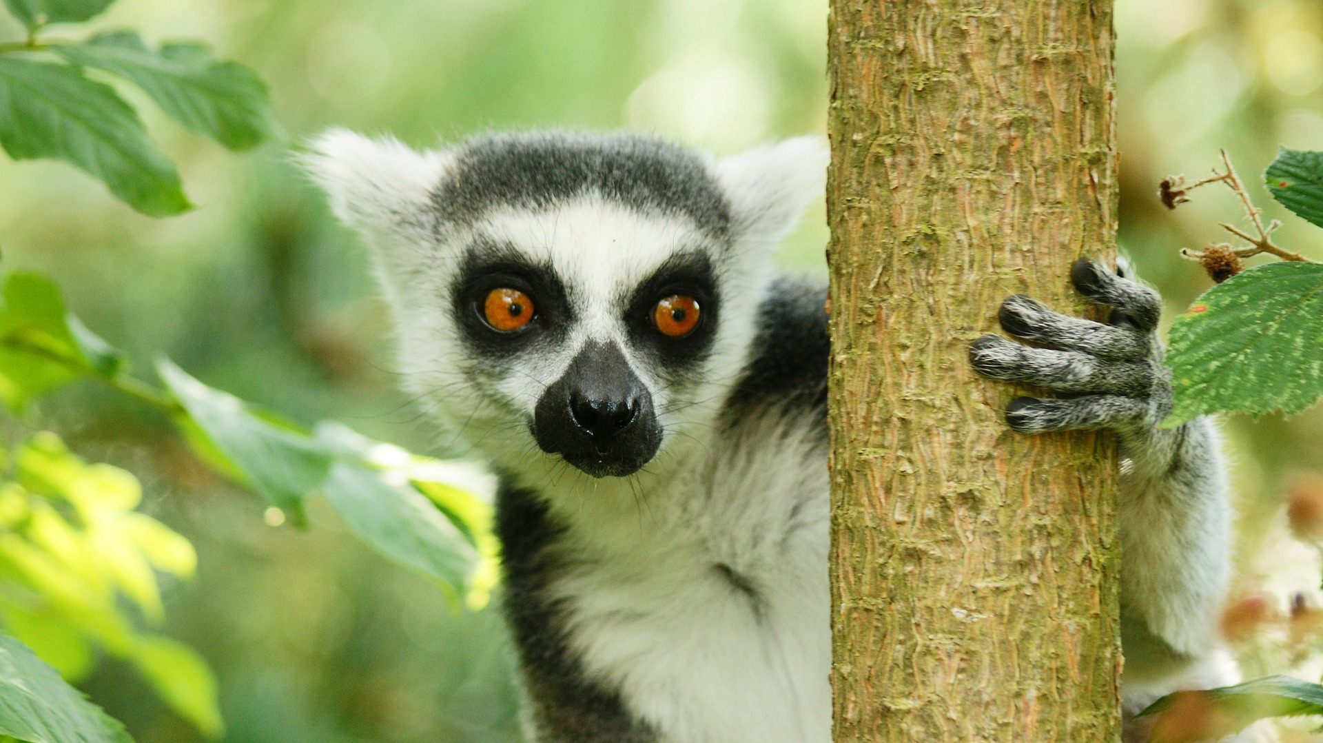 Biodiversiteit Op Madagaskar photo