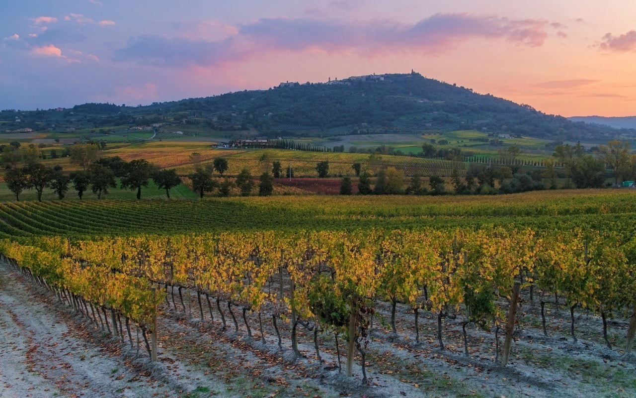 Napa Valley Wine Guide: The Best Vineyards To Visit photo