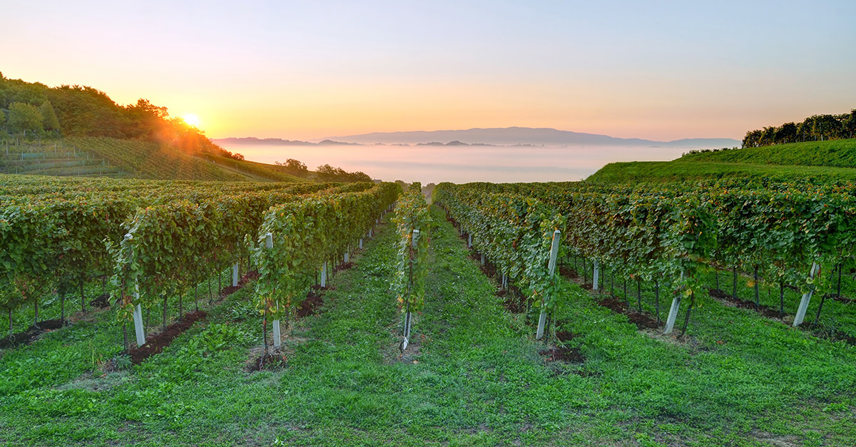 You Can Find Some Of The Best Sparkling Wines You?ve Never Tasted In Slovenia photo