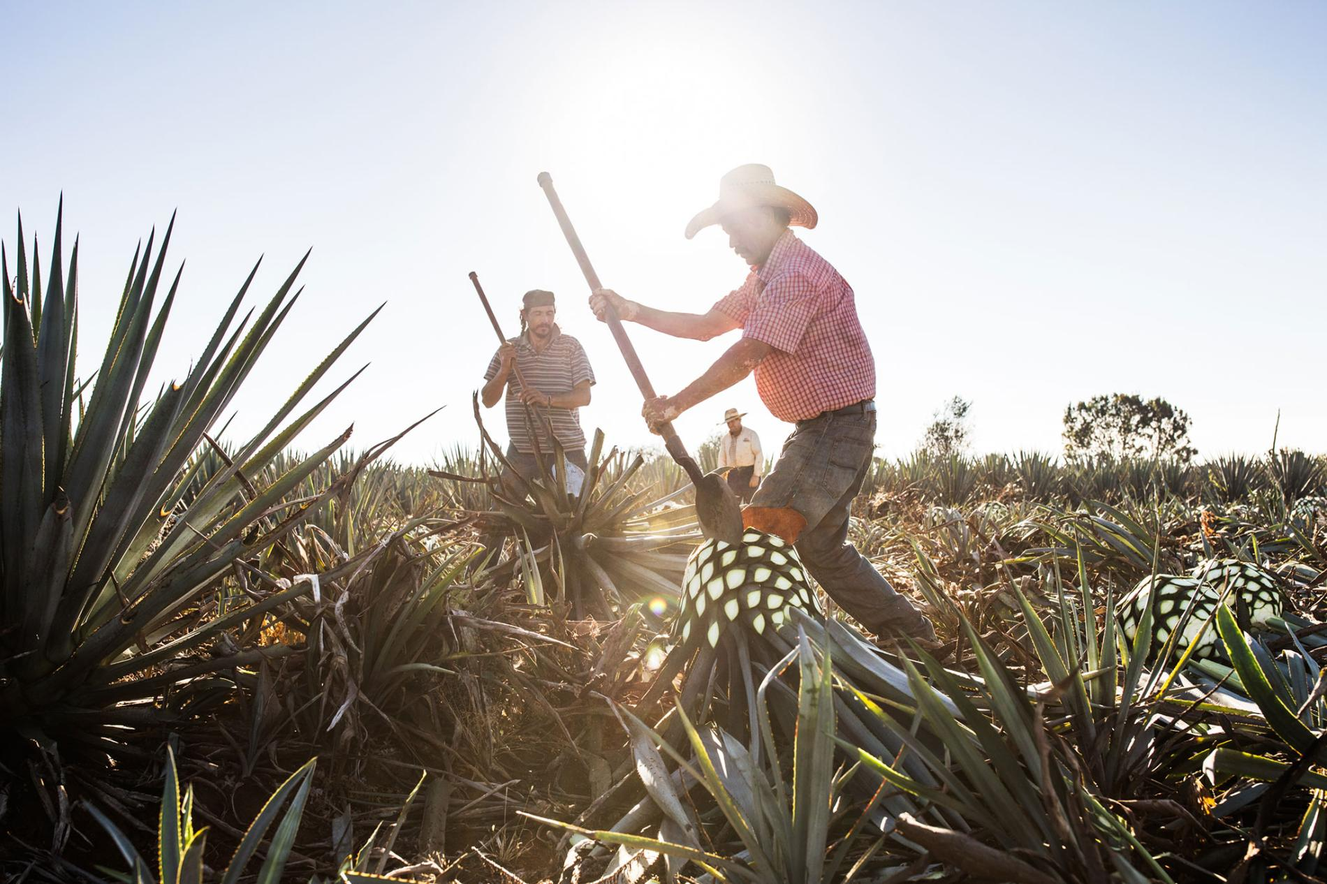 The Wild, Vibrant History Of Mexican Tequila photo
