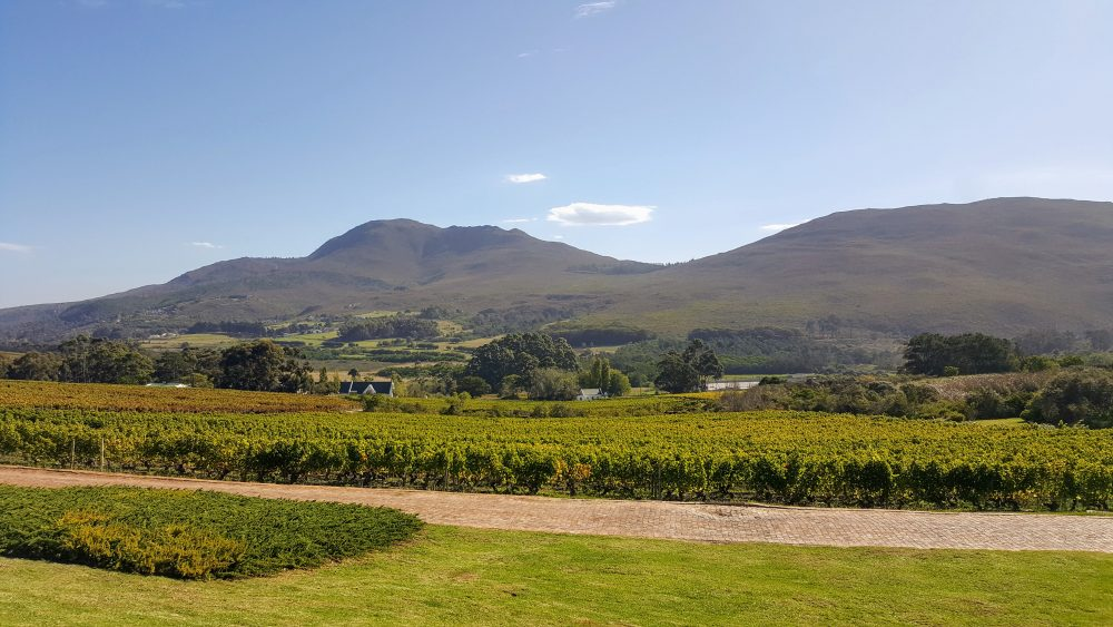What it takes to produce wine on one of SA's leading estates photo