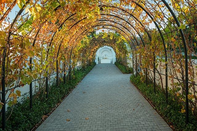 Cape Town's Curious Wine Spots photo