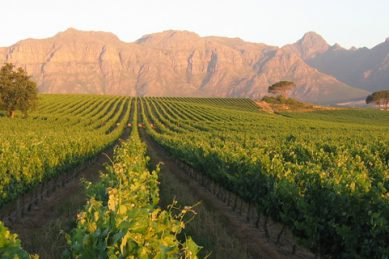 Kleine Zalze Wines Go From Cellar To Stellar photo
