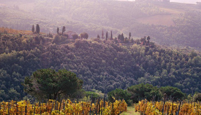 Biodynamic Tuscan Winery Querciabella Looks To Burgundy For Inspiration photo