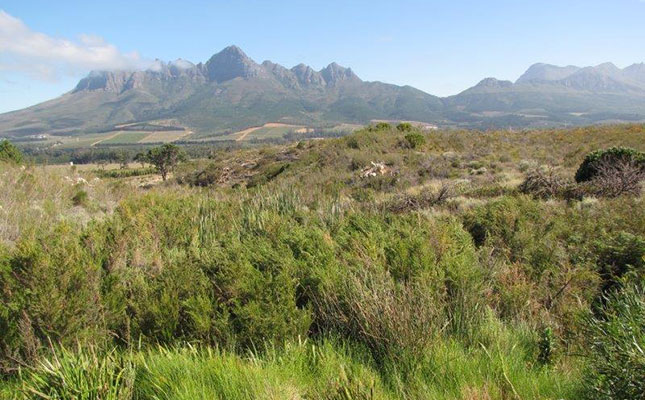 Vergelegen Rehabilitates 2 000ha Of Fynbos photo
