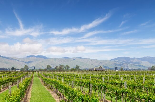 New Zealand 2017 White Wines: A Vintage Recap And What To Try photo