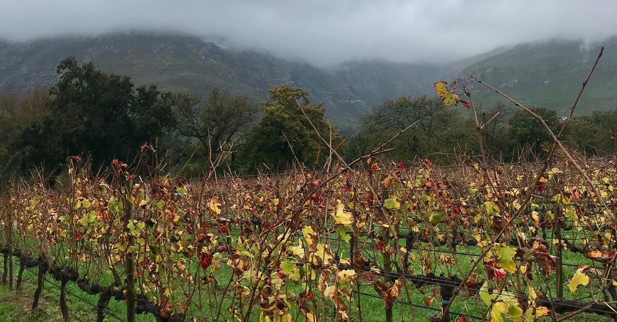 The Upper Blaauwklippen Vintners Experience photo