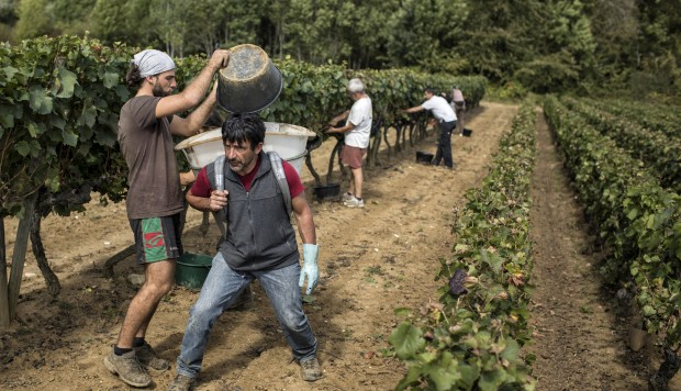 How Climate Change Makes Winner And Loser Of The World?s Vineyards photo