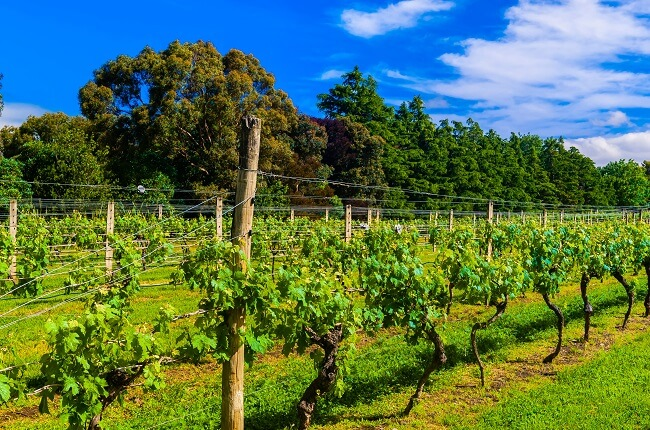 New Zealand 2016: Red Wines To Buy, Including Top Pinot Noir photo
