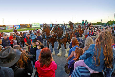 Budweiser Clydesdales At The Meadowlands photo