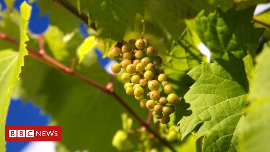 Hot Weather Boost For Cider And Wine photo