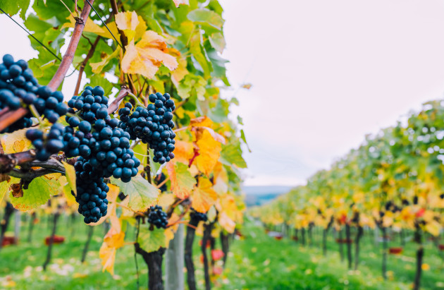 Nyetimber Reveals Plans To Grow Exports photo