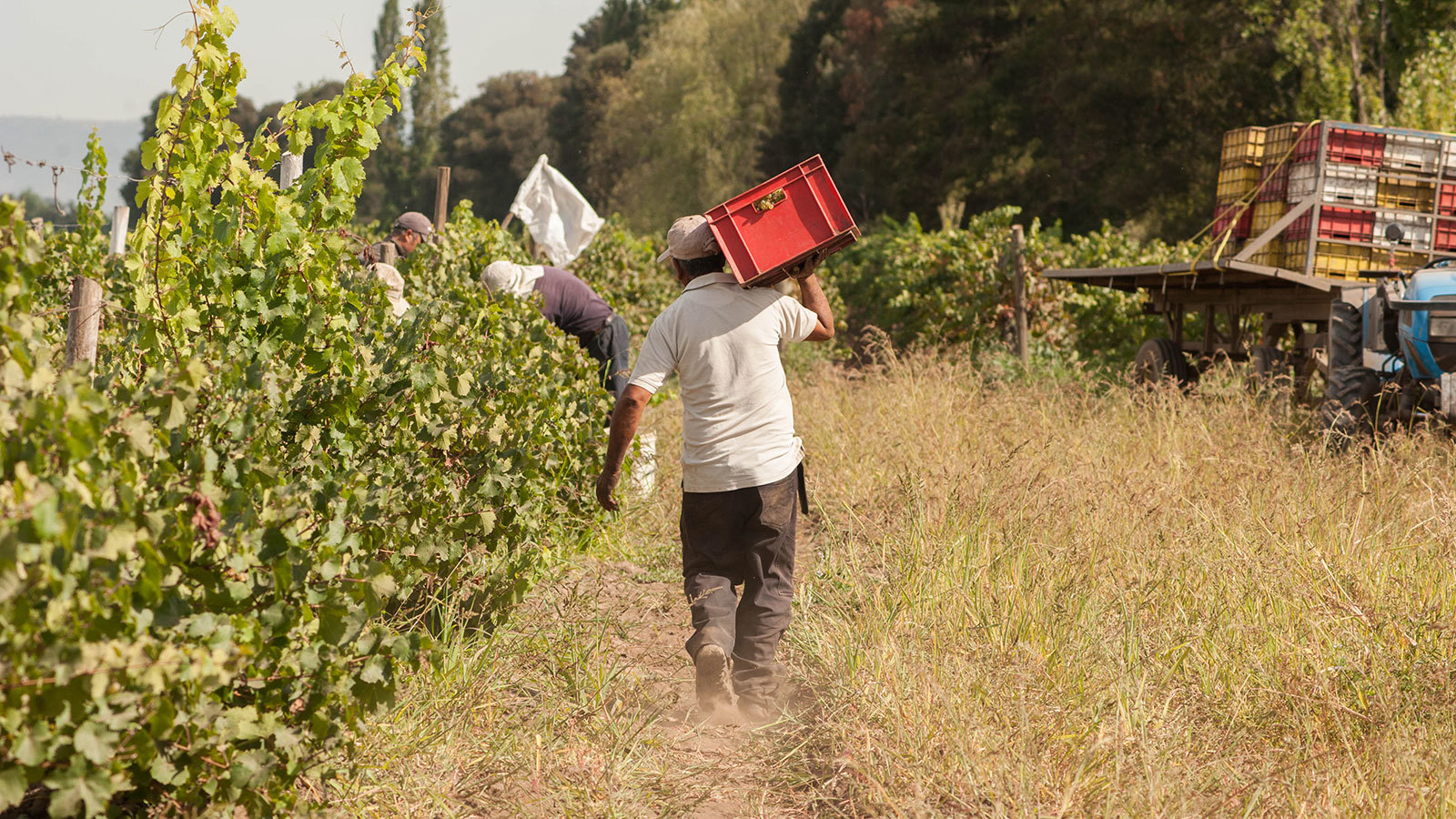 After Back-to-back Difficult Vintages, Chile's 2018 Harvest Brings Relief photo