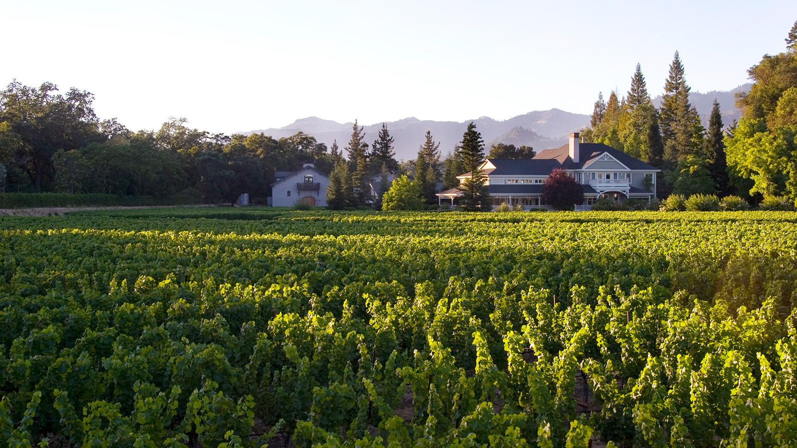 Duckhorn Wine Company Buys Sonoma Pinot Noir Star Kosta Browne photo