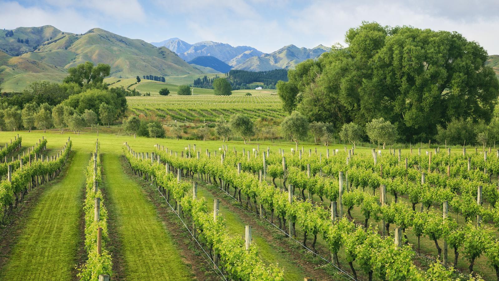 Marlborough Wineries Aim To Protect Reputation photo