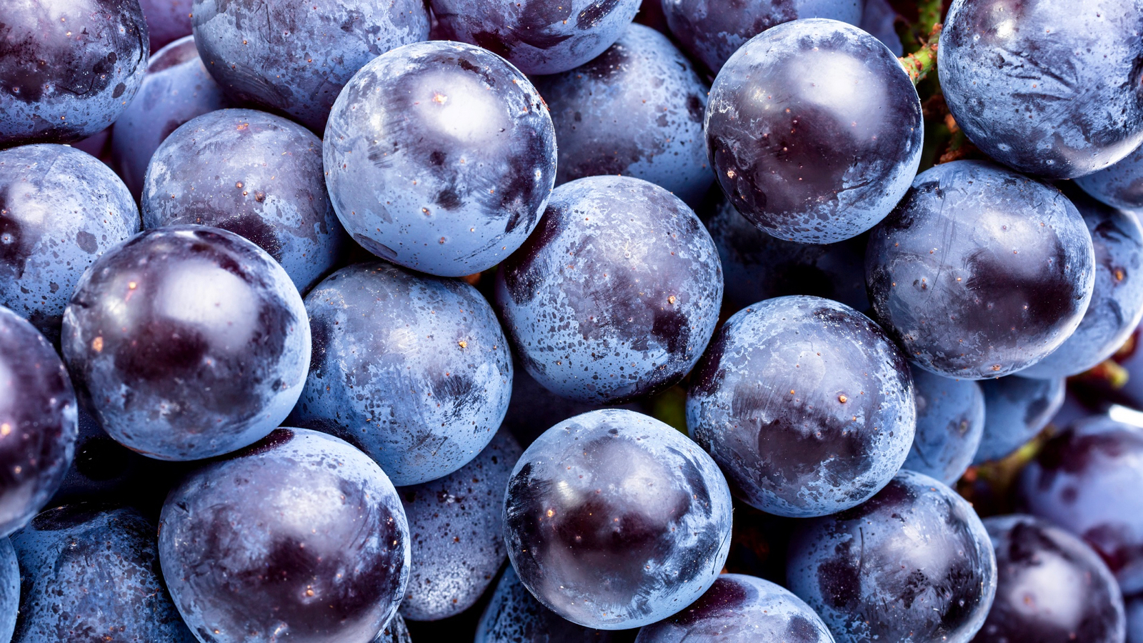 Wine Is Full Of Healthy Polyphenols. But What's A Polyphenol? photo