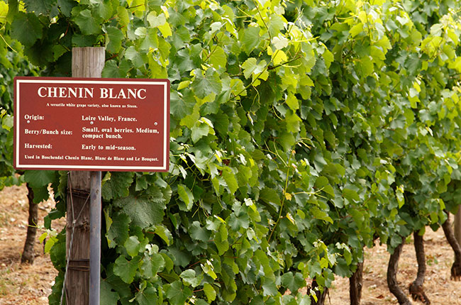 Chenin Blanc – What's not to love? photo