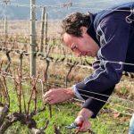 Winter Activities In The Vineyards Of Creation photo