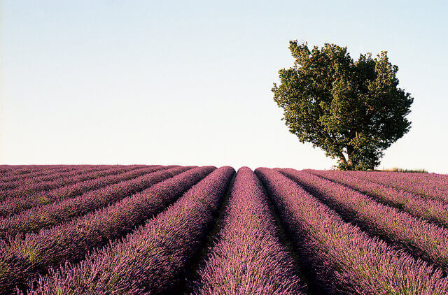 Provence Rosé Beyond The Ubiquitous And Uninspired photo