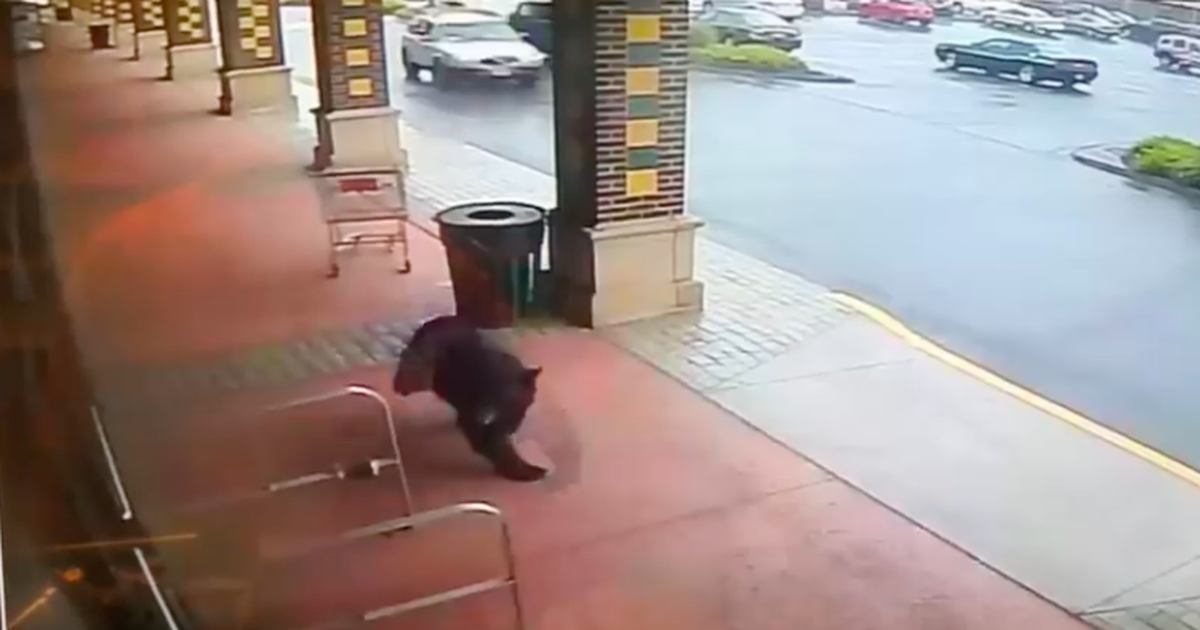 Black Bear Trying To Live Its Best Life Just Wanted To Go To The Liquor Store photo
